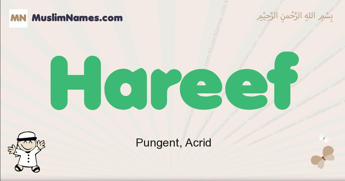 Hareef muslim boys name and meaning, islamic boys name Hareef