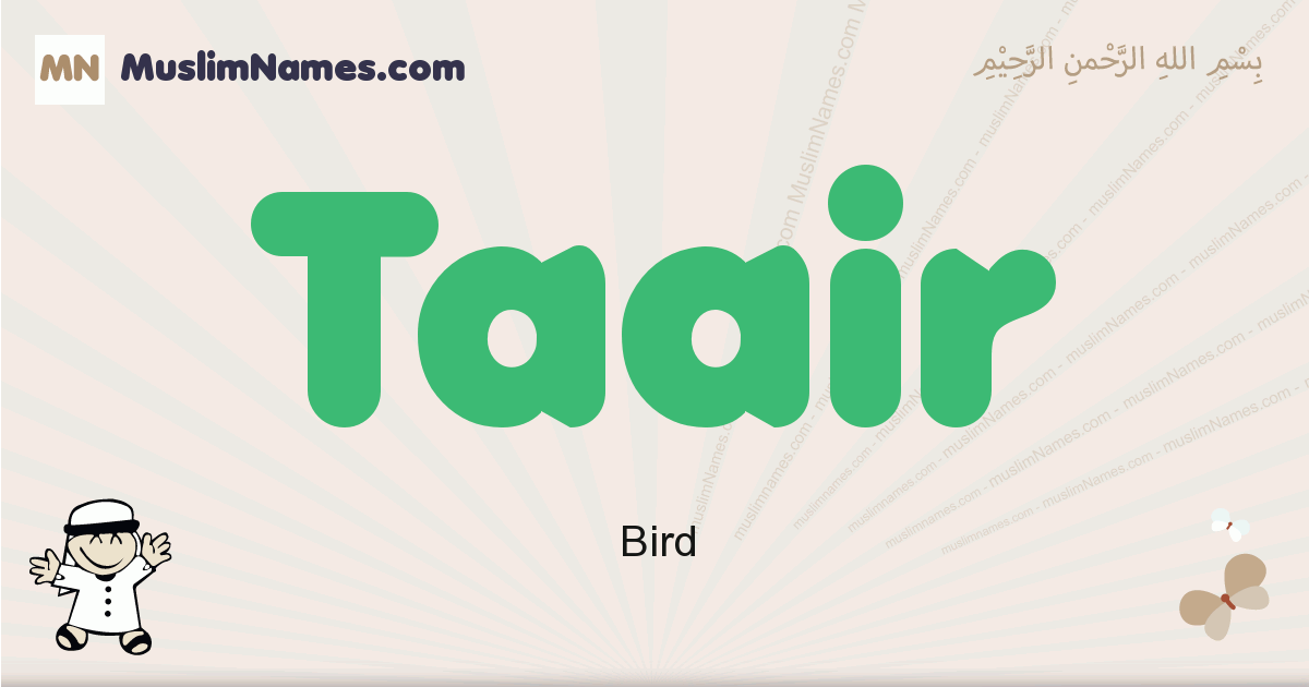 Taair muslim boys name and meaning, islamic boys name Taair